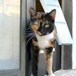 Pet doors aren't just for the dogs. #CatDoors let your feline friend roam outdoors.  Your cat loves to feel the wind and sun on his fur, while rolling in grass and chasing bugs. http://bit.ly/2MdBrfN
