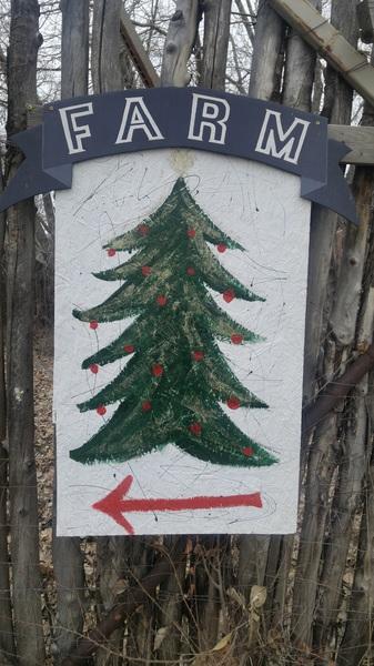 Cutest #christmastree #farm ever. 118 State Rd 240. #taos #nm #christmastime #christmas #xmas