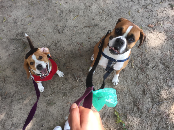Park time with Rocco and Aldo!