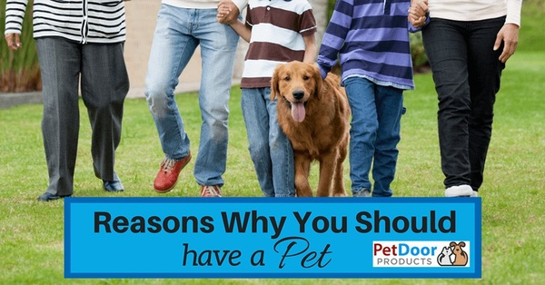 7 Reasons Why You Should Have a Pet
