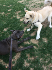 Shadow playing with his best pal Bane!