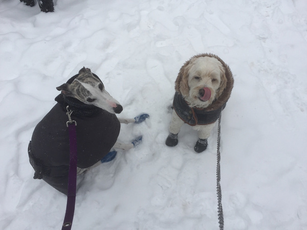 These fellas deserve a treat for trekking out in the snow!