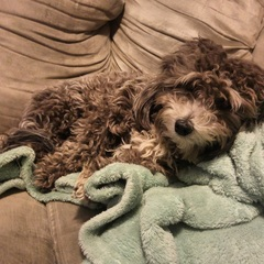 Humphrey enjoying the cozy weather