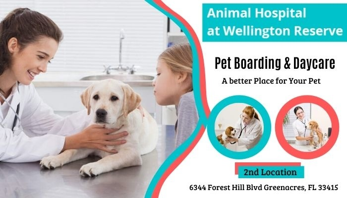 Reliable Center For Pet Boarding