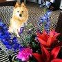 Thanks @estherwerkman for the flowers 💐. Ze zijn er hier heel blij mee #office #misspublicitynl #lifeofbeer #officedog